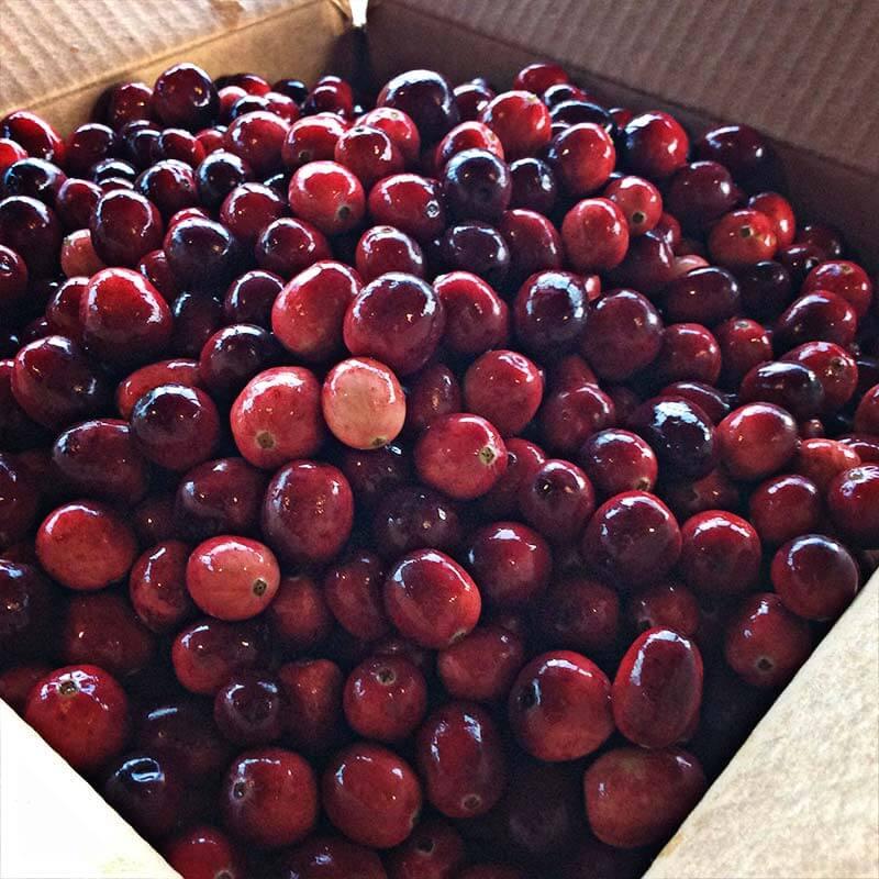 Fresh Cranberries Fresh Cranberries